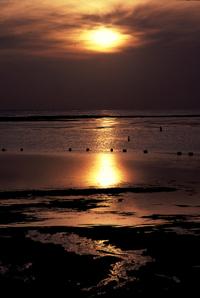 Bali311_1